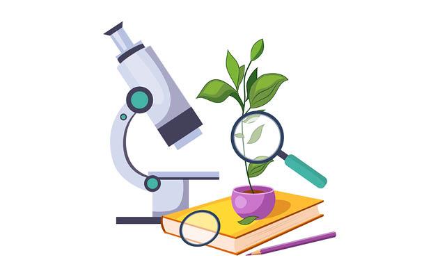 Study plants
