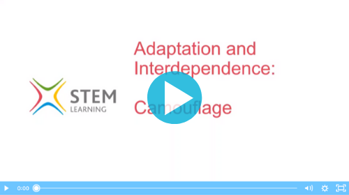 Remote lesson - Adaptations and interdependence - key stage 2