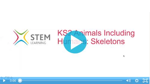 Remote lesson - skeletons - key stage 2