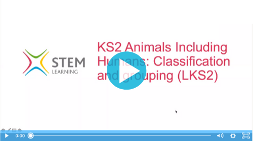 Remote lessons - classification and grouping - ks2