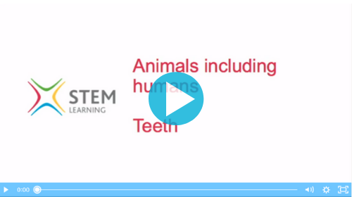 Animals including humans: teeth