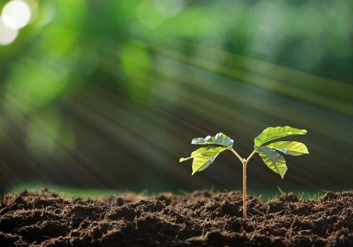 Plant growing in soil