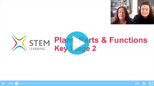 Remote lesson - plants, parts and functions - key stage 2