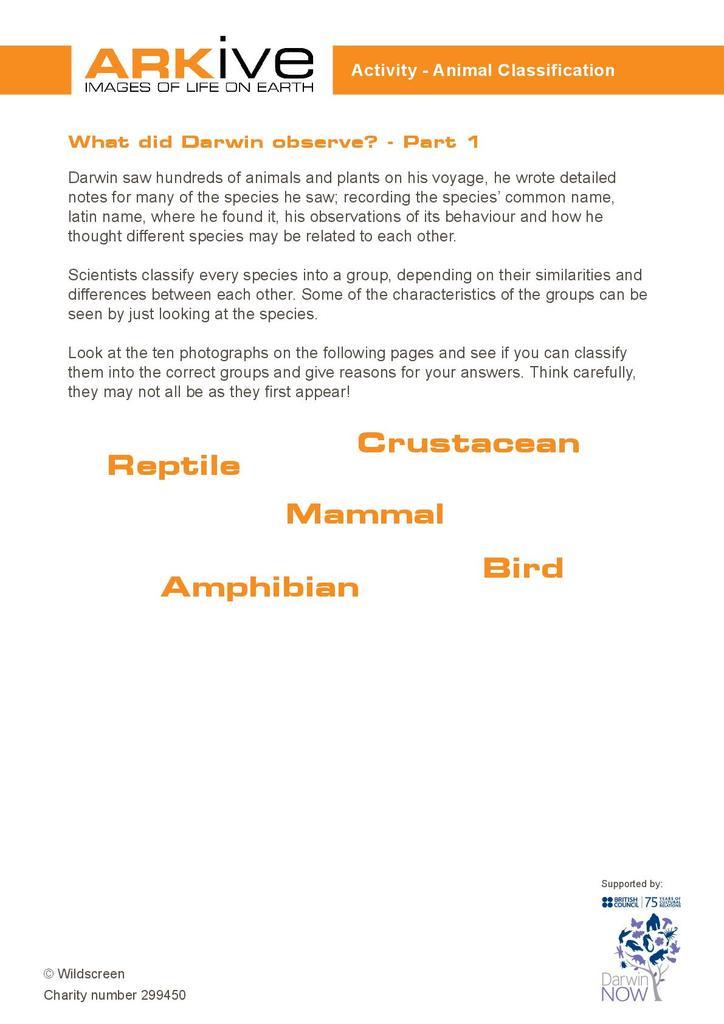 Animal Classification   STEM