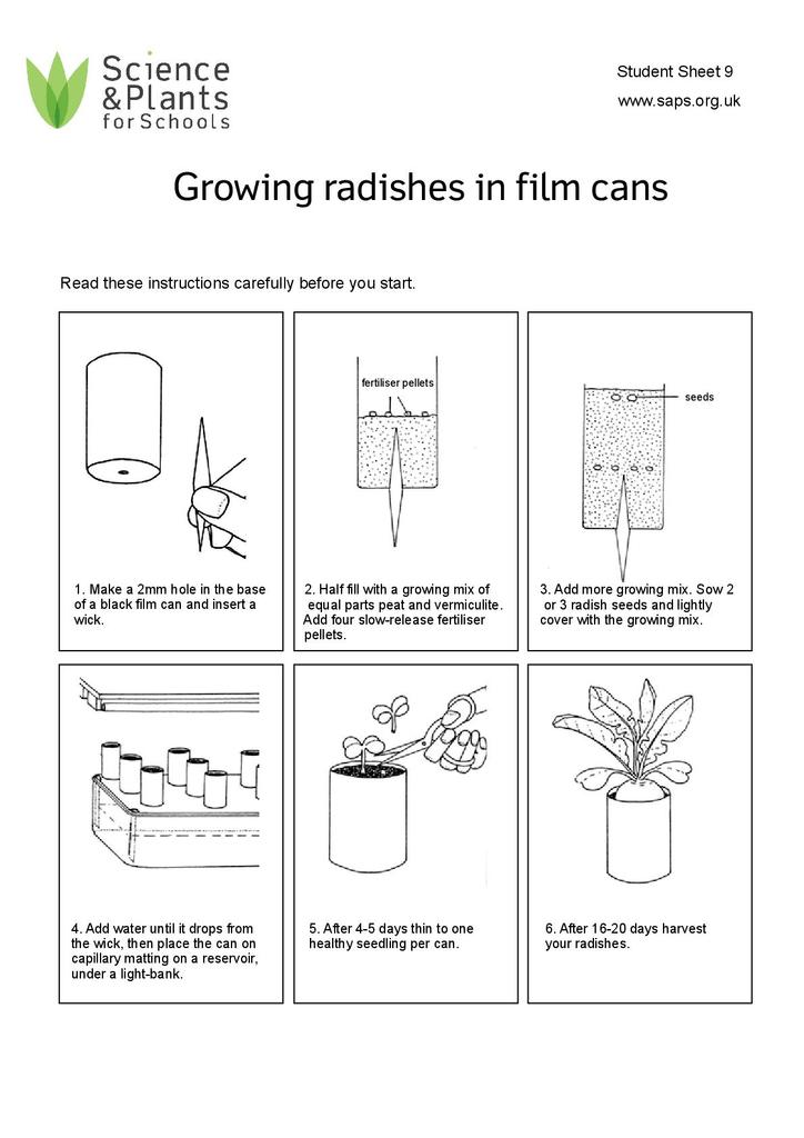 Investigating Plant Growth: Growing Radishes in Film Cans | STEM