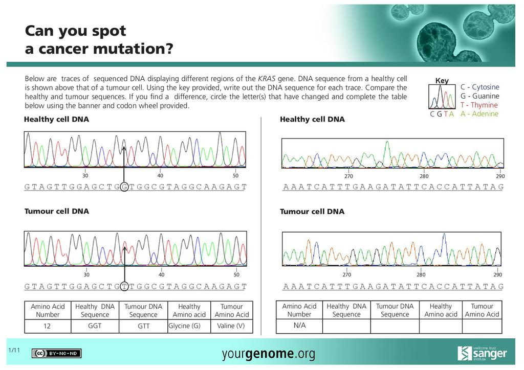 Kras Cancer Mutation Activity Stem