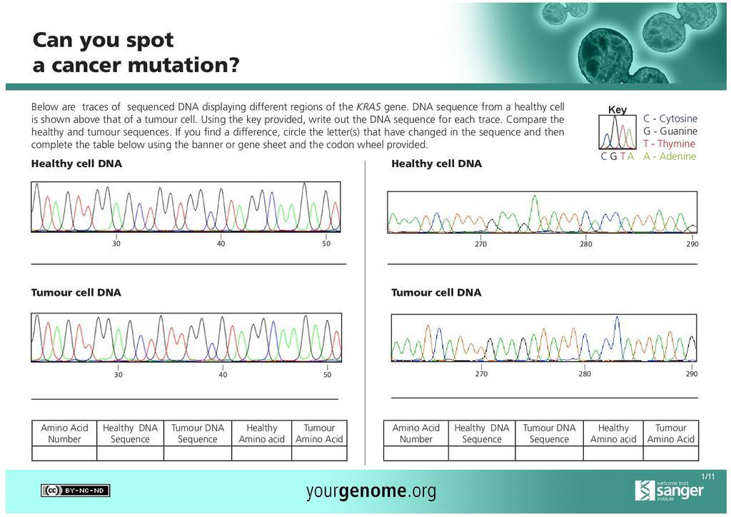 gene mutations activity worksheet answer key