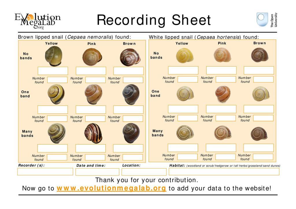 recording sheet (activity sheet) 186 21 kb
