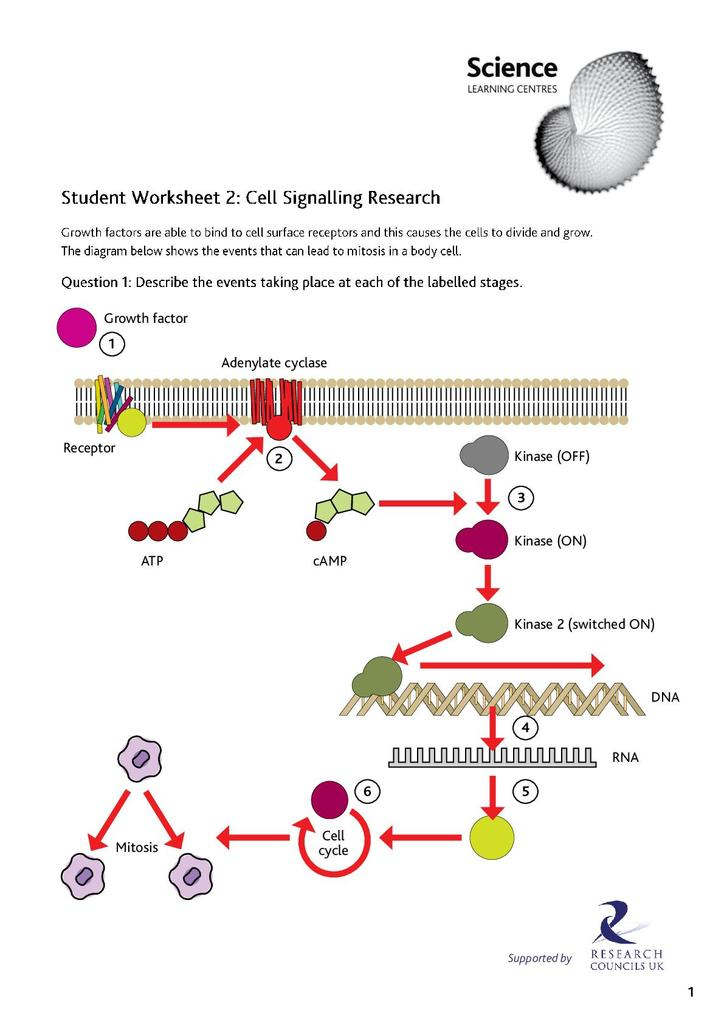Cell Signalling Pdf