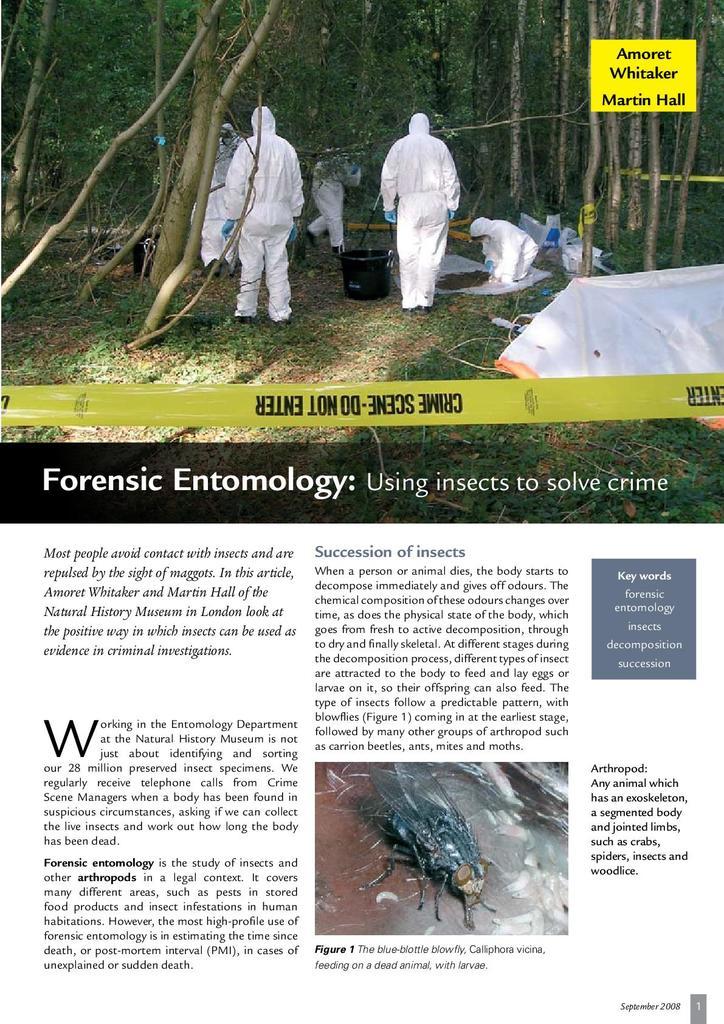 Forensic Entomology Stem